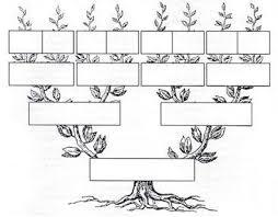 estructura de árbol genealógico en blanco