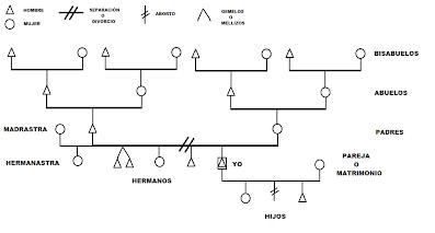 como hacer árbol genealógico de la familia